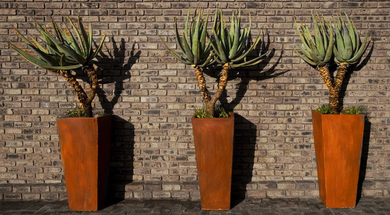 Three-aloes